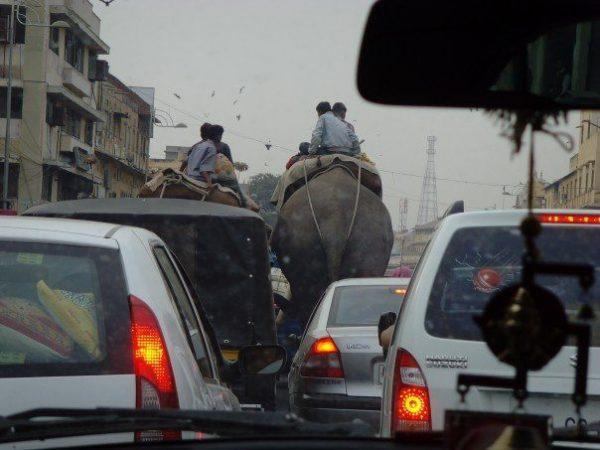 Stuck in traffic in India with elephants