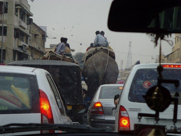 Stuck in traffic...with elephants!