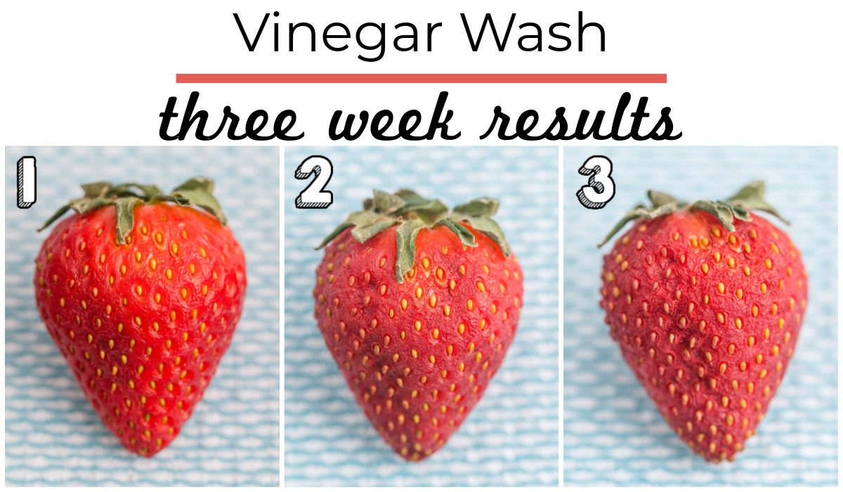 3 weeks worth of results from strawberries being stored in an open container after a vinegar wash.