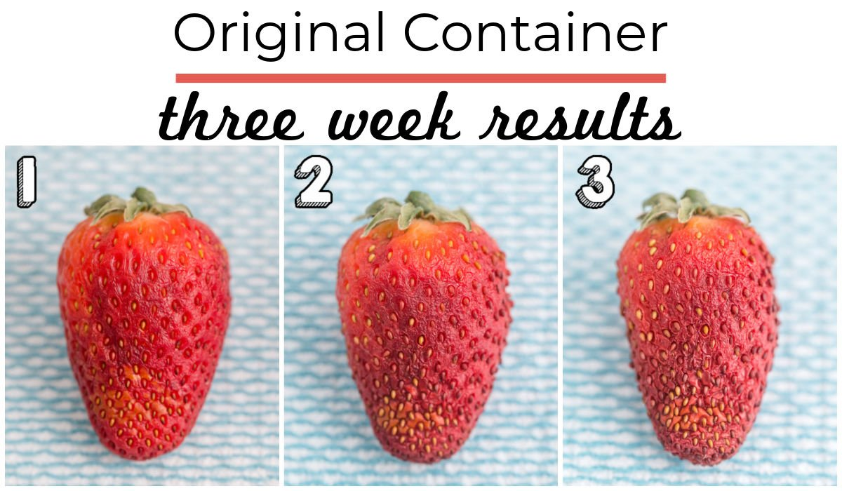 3 weeks worth of results from strawberries being stored in their original container.