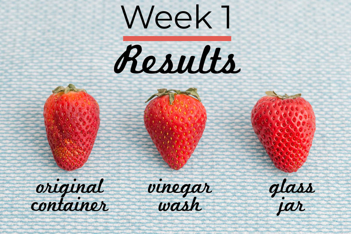 Week 1 results of the strawberry storing experiment.