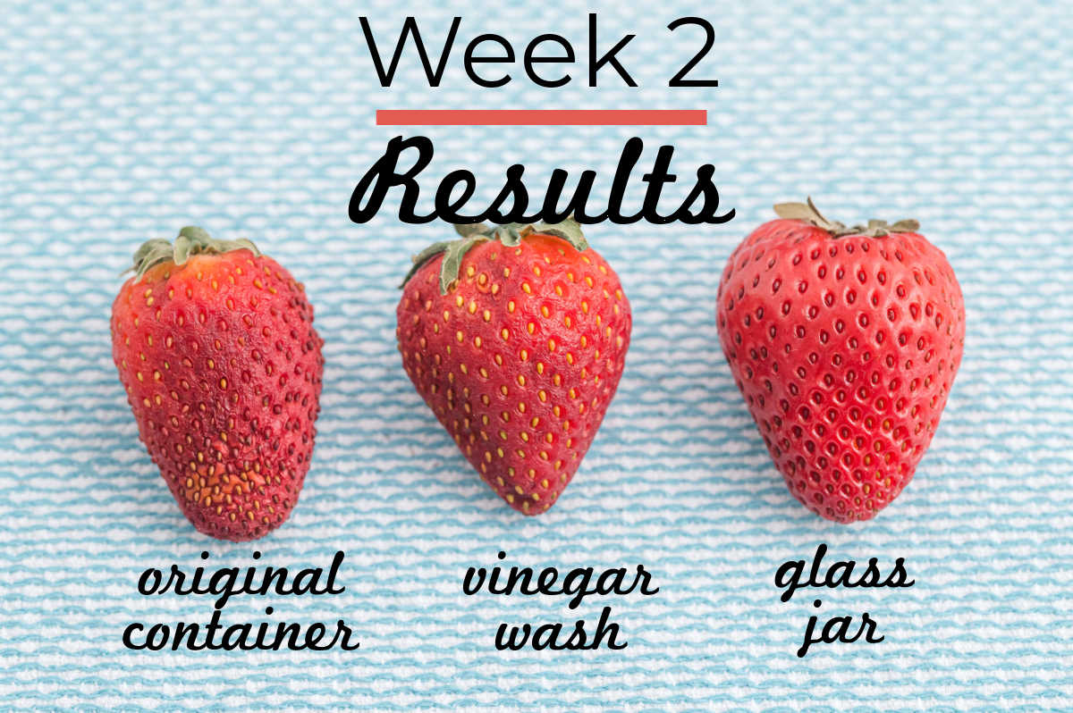 Week 2 results of the strawberry storing experiment.
