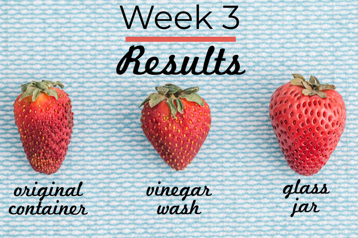 Week 3 results of the strawberry storing experiment.